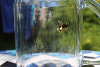 1 Photography Bee Jar
